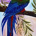 Red Tail Macaw by Kathy Przepadlo