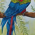 Red Tail Macaw Too by Kathy Przepadlo