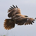 Red Tail Take Off by Paul Marto