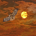 Red Tailed Hawk by Angela Stanton