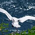 Red Tailed Tropic Bird by Mary Deal