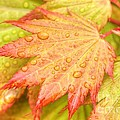 Red Tip Leaf by Tap On Photo