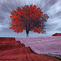 Red Tree In A Field by Bruce Nutting
