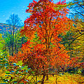 Red Tree by John M Bailey