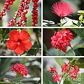 Red Tropicals Collage by Carol Groenen