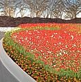 Red Tulip Garden by Gwendolyn Hope-Battley