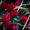 Red Tulip River by Doug Sturgess
