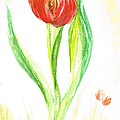 Red Tulip -of Amsterdam   by Teresa White