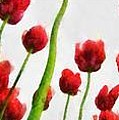 Red Tulips From The Bottom Up Triptych by Michelle Calkins
