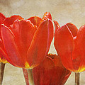 Red Tulips In Art by Keith Gondron