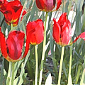 Red Tulips by Jeanne A Martin