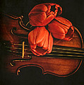 Red Tulips On A Violin by Edward Fielding