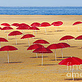 Red Umbrellas by Carlos Caetano