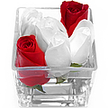 Red Versus White Roses by Andee Design