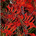 Red Devils Tongue Vine Vertical by Kathy Barney
