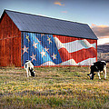 Red White And Moo by Ryan Smith