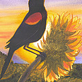 Red-wing Blackbird by Catherine G McElroy