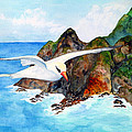 Redbilled Tropicbird by Patricia Beebe
