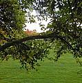 Redbud Tree In Autumn by Susan Wyman