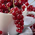 Redcurrant Close Up by Luv Photography