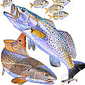 Redfish Trout by Carey Chen