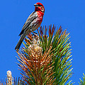 Redheaded Tree Topper by Bob Hislop
