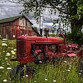 Reds In The Pasture by Debra and Dave Vanderlaan