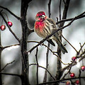 Reds Of Winter by Karen Wiles