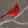 Reds by Tony Beck
