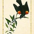 Redwing Blackbird Vertical by Elaine Plesser