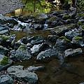Redwood Creek by Wesley Elsberry