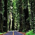 Redwood Highway by Benjamin Yeager