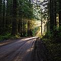 Redwood National Park Morning by Vishwanath Bhat