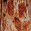 Redwood Spirit by Brian Williamson