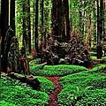 Redwoods Wonderland by Benjamin Yeager