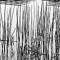 Reeds IIi by Stuart Gordon