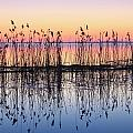 Reeds Reflected In Water At Dusk Ile by Yves Marcoux