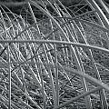 Reeds by Stephanie  Bland