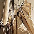 Reefing The Mainsail In Sepia by Jani Freimann