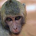 Reese's Monkey Portrait by J L Woody Wooden