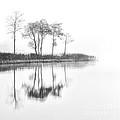 Reflected Calm by Richard Burdon