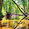 Reflected Forests by Art Dingo