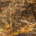 Reflected Gold by Susan Herber