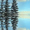 Reflecting Evergreens In Winter by Nina Silver