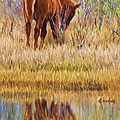 Reflecting Foal by Alice Gipson