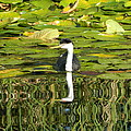 Reflecting Grebe  by Nicki Bennett
