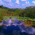 Reflecting In The Glades by Charlie Cliques