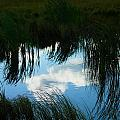 Reflecting The Grass by Jeff Swan