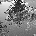 Reflection 002 by Howard Tenke
