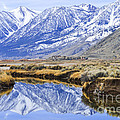 Reflection From Genoa Ln by L J Oakes